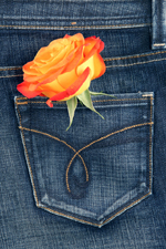 rose and denim